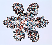 Rimed stellar dendrite snowflake, light micrograph