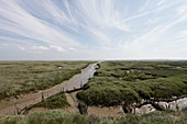 Leigh marshes, Essex, UK