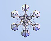 Sectored plate star snowflake, light micrograph