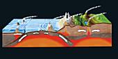 Plate tectonics, illustration