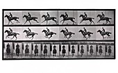 Horse and rider galloping,Muybridge motion study,1880s