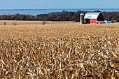 Cornfield,Wisconsin,USA