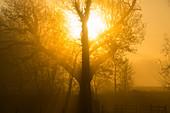 Sunrise,Ambleside,Lake District,UK