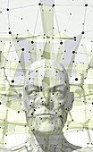 Human head and facial mapping,illustration