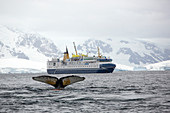 Humpback whale and ship