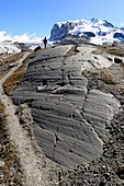 Striated bedrock and Monte Rosa