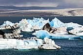 Icebergs in Icelandic glacier lagoon