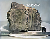 Martian meteorite ALH 84001