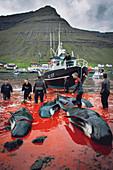 Whaling, Faroe Islands