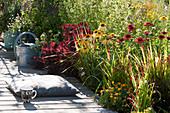 Terrassenbeet mit Sonnenhut, Ringelblume, Perückenstrauch und japanischem Rotgras