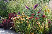 Beet mit Sommerflieder, Sonnenhut, Perückenstrauch und Japanischem Rotgras