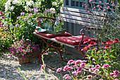 Sitzplatz am Gartenhaus, Spinnenblume, Zauberglöckchen, Strauchhortensie und Sonnenhut
