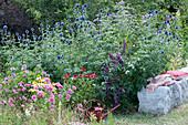 Bienenfreundliches Beet mit Kugeldistel, Scheinsonnenhut und Schmetterlingsflieder