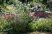 Sommerbeet mit Scheinsonnenhut 'Butterfly Kisses', Oregano, Malve, Prachtkerze und Schmuckkörbchen