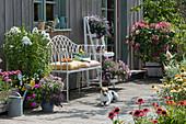 Sommerterrasse mit Flammenblume, Petunien, Zauberglöckchen, Elfenspiegel, Scheinsonnenhut und Rispenhortensie 'Diamond Rouge', Hund Zula