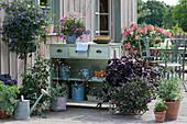 Naschterrasse mit Enzianbaum, Tomate, Chili, Grünkohl, Miso, Basilikum 'African Blue', Salbei, Rispenhortensie, Elfenspiegel, Zauberglöckchen und Hängegeranie