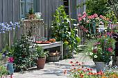 Naschterrasse mit Tomate, Gurke, Chili, Salbei, Schmuckkörbchen, Schmucklilie und Rispenhortensie