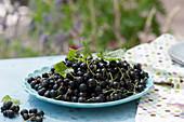 Teller mit frisch gepflückten schwarzen Johannisbeeren