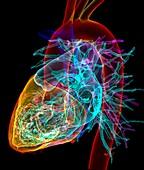 Human heart,3D CT scan