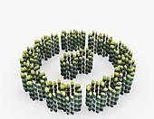 Axoneme microtubule structure,illustration
