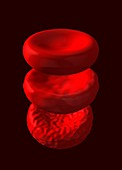 Dead,dying and healthy red blood cells,illustration