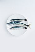 A plate of raw mackerel and sardines