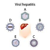 Hepatitis types A B C D E,illustration