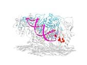 HIV-1 reverse transcriptase and drug delivery, illustration