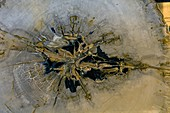 Dipterocarpus fossil wood