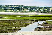 Oyster racks, St Vaast la Hougue, Normandy, France