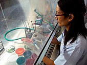 Scientist in microbiology laboratory