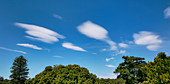 Lenticular clouds over trees