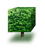 Cube tree, illustration