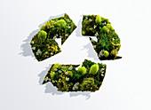 Recycling, conceptual image
