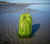Newcastle Bay, Northern Ireland, UK