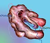 CRISPR-Cas9 gene editing complex, illustration