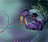 CRISPR-Cas9 gene editing complex, conceptual illustration