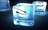 Frozen sperm, conceptual illustration