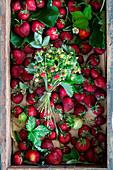 Frische Erdbeeren und Walderdbeeren in Holzkiste