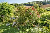 Garten mit blühender Kletterrose