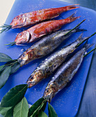 Sardines and red mullet for grilling