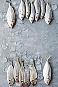 Fresh sea bream