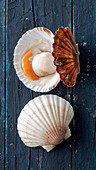 Fresh scallops, closed and opened