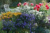 Sitzplatz am Beet mit Herbstastern, Dahlien und Sonnenbraut