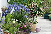 Sommer-Terrasse mit Schmucklilie, Wandelröschen, Elfenspiegel, Zauberglöckchen, Schmuckkörbchen und Weinrebe
