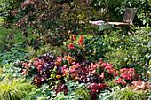 Sommerbeet mit Begonien 'Valentino Pink', Purpurglöckchen, Dahlie, Wolfsmilch, Kapuzinerkresse, Frauenmantel, Perückenstrauch und Segge