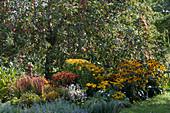 Blühendes Spätsommer - Staudenbeet vor Apfelbaum
