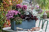 Herbstchrysanthemen, Purpurglöckchen 'Starry Night', Greiskraut und Fetthenne im grauen Kasten