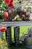 Frisch geerntete Kartoffeln, Äpfel, Weintrauben, Zwetschgen, Birne, Brombeeren in Drahtkörben auf Bank im Garten