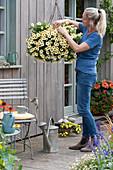 Ampel mit Petunie Beautical 'French Vanilla', Frau putzt verblühte Blüten aus